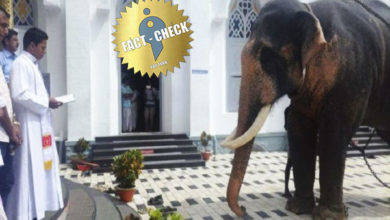Photo of Rumor has it that elephants were proselytized and joined to the Velankanni Church!