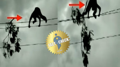 Photo of Was the video of the EB employee removing the branch on the power line taken during the Nivar storm?